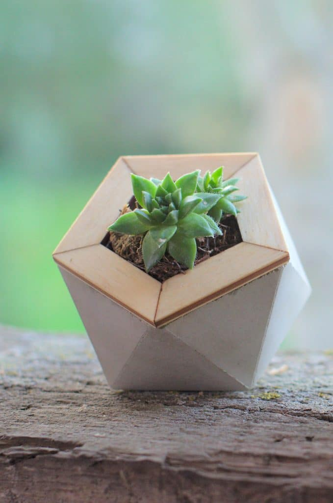 Detail view of the icosahedron concrete planter